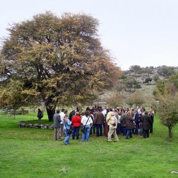Περιοχή Ζωμίνθου, μνημειακό δέντρο κράταιγου ή τρικοκκιάς (Crataegus monogyna) (Χαράλαμπος Φασουλάς - ΜΦΙΚ)