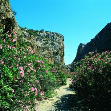 Παραποτάμια βλάστηση στο Αγιοφάραγγο με κυρίαρχο είδος τις πικροδάφνες.