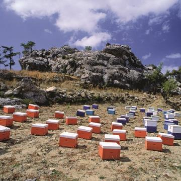 Το μεγαλύτερο ποσοστό μελιού στην Κρήτη παράγεται στις ορεινές περιοχές, Όρος Δίκτη (Απόστολος Τριχάς - ΜΦΙΚ)