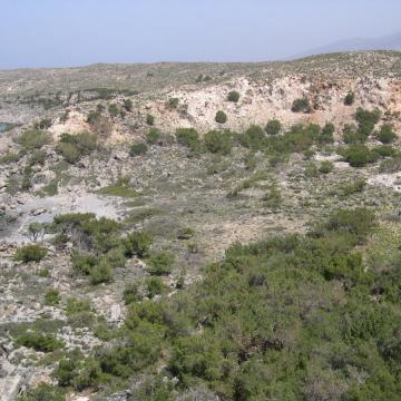 Χαρακτηριστικός οικότοπος της περιοχής οι λόχμες άρκευθων (Juniperus oxycedrus ssp. macrocarpa).