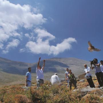 Απελευθέρωση αρπακτικών πουλιών στο φυσικό τους περιβάλλον (Μίνα Τρικάλη - ΜΦΙΚ)