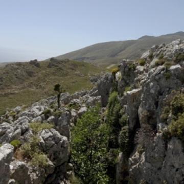 Near Selia area