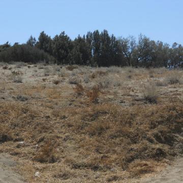 Αναπτυγμένη αμμοθινική-αλοφυτική βλάστηση και συστάδες άρκευθου στον Κομμό.