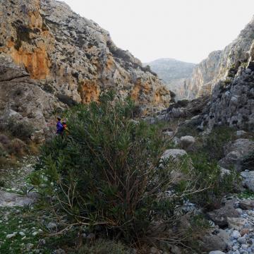 Walking in the Pervolakia gorge (farangi Kapsa)