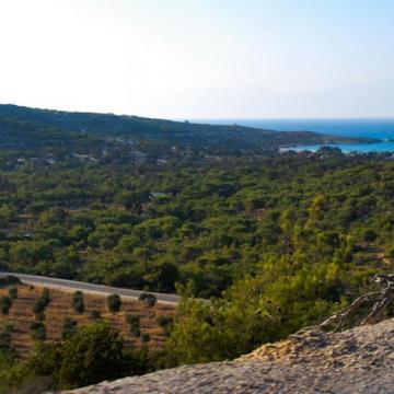 Gavdos pine forest