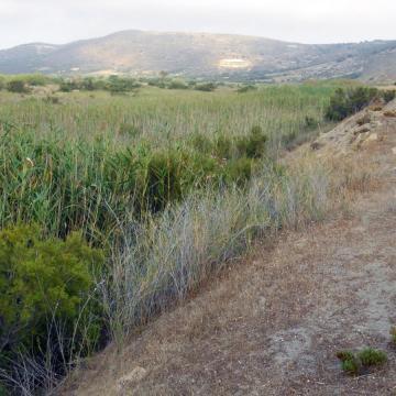 Part of Geropotamos Estuary