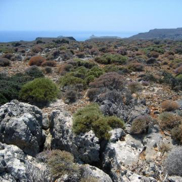 Zakros mountains, Choiromandres area